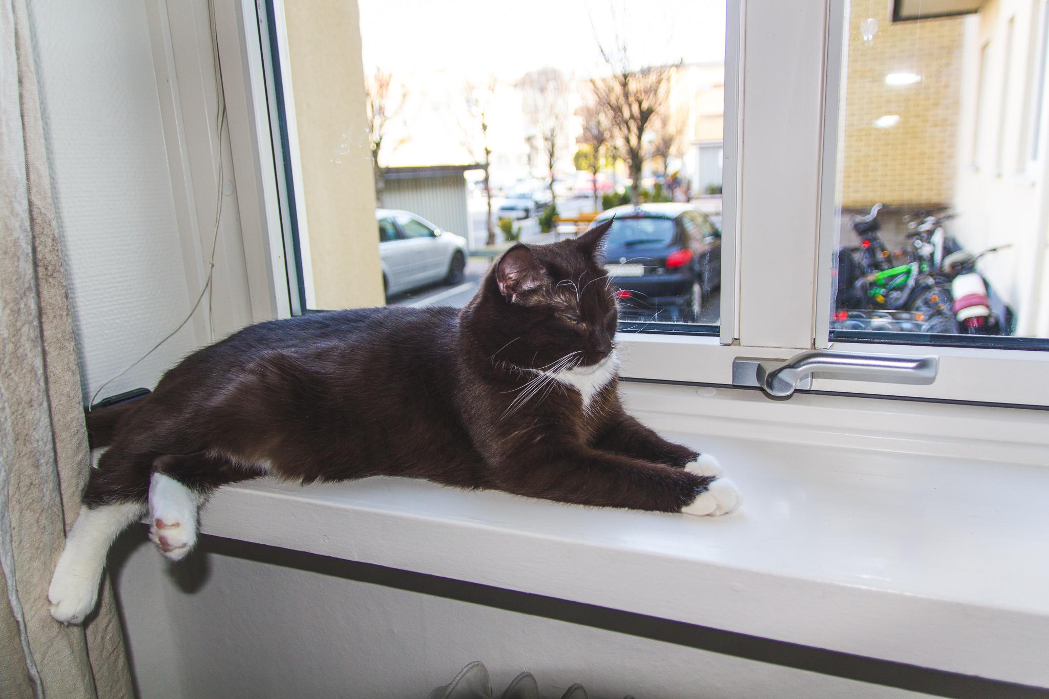 binky i fönster