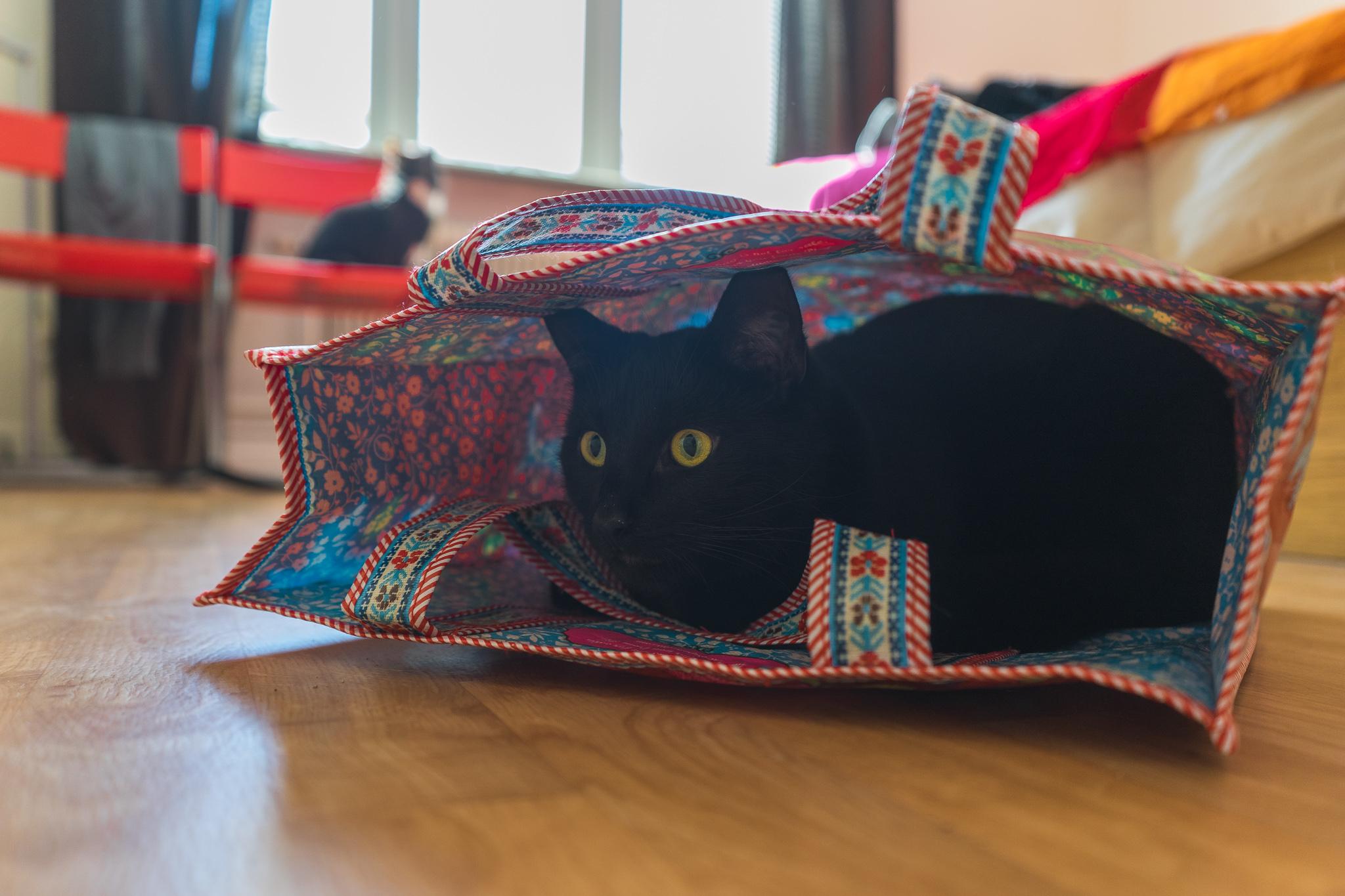 busen in a bag - 20141003